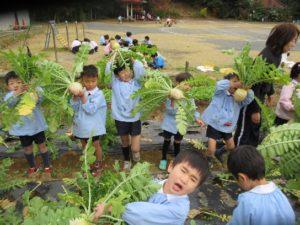 季節の野菜の収穫